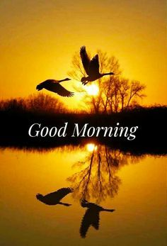 Good Morning Images Good Morning Flowers Pictures, Good Morning Sunday Images, Good Morning Beautiful Pictures, Good Morning Nature, Good Morning Roses, Good Morning Funny, Good Morning Messages, Morning Pictures, Beautiful Morning
