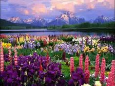 Wildflower Heaven, Grand Teton National Park, Wyoming-- We plan to visit the Tetons someday Grand Teton National Park, National Parks, Beautiful World, Beautiful Places, Amazing Places, Beautiful Beautiful, Absolutely Stunning, Beautiful Morning, Stunning View