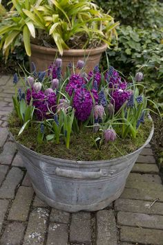 Spring Flowers in – Container Gardening Container Flowers, Container Plants, Container Gardening, Bucket Gardening, Pot Jardin, Spring Bulbs, My Secret Garden, Spring Garden, Dream Garden