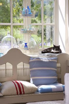 cats in traditional style homes   photos country main categories styles