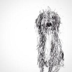Catherine Rayner, drawing of her friend's dog Bertie Art And Illustration, Illustrations, Animal Paintings, Animal Drawings, Art Drawings, Shetland, Scribble Art, Dog Artwork, Dog Portraits