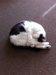 """""""For me, one of the pleasures of cats' company is their devotion to bodily comfort."""" -- Compton Mackenzie"""