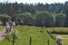 Poney et chevaux vous attendent à la ferme équestre Equivigotte ! Que vous soyez débutant ou confirmé, une équipe professionnel vous attend à Girmont-Val-d'Ajol.