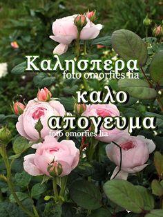 Greek, Plants, Decor, Decoration, Plant, Decorating, Greece, Planets, Deco