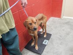 Tracy - URGENT - PIKE COUNTY ANIMAL SHELTER in Pikeville, Kentucky - ADOPT OR FOSTER - Adult Male Hound Mix