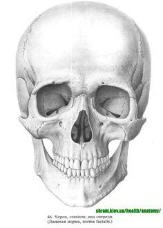 crane humain dessin medical - Recherche Google