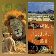 Lion, Animals, Bible, Leo, Animales, Animaux, Lions, Animal, Animais