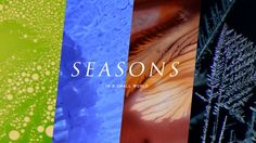 As a new year is coming, we assembled our team to craft an end-of-year video that would capture viewers' imagination. We came up with an idea to use the perspective of a microscope/macro-lens to present the four seasons in our human world. All editing materials are from the previous microscope/macro footages and some unused shots, including footages from color paint experiments and those of chemical reactions.   Also, wish all a happy new year!  Credits Concept/Design:Yue Zhang, Xin Ga...