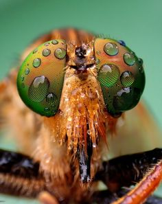 Dews On Eyes by Iwan Ramawan, via Fotografia Macro, Macro Shots, Macro Photography, Nature Photos, Design Inspiration, Compact, Eyes, Artist, Animals
