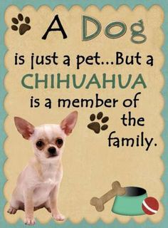Chihuahua Is A Member of The Family Magnet | eBay
