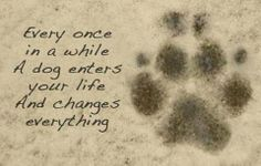 Every once in a while, a dog enters your life and changes everything. <3