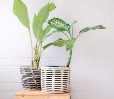Woven basket and plastic plant pot, excludes plant. Decor, Plastic Plant Pots, Plastic Plants, Woven, Home Decor, Decorative Wicker Basket, Potted Plants, Baskets Pots, Wicker