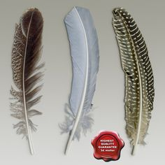 c4d bird feathers - Bird feathers collection... by 3d_molier