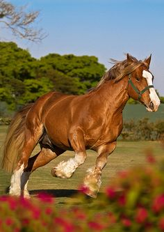 I LOVE Draft Horses!!!!!