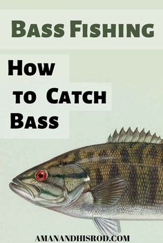 This article is full of tips and tactics about how to catch bass. If you are loo. - This article is full of tips and tactics about how to catch bass. If you are looking to catch more - Trout Fishing Tips, Walleye Fishing, Fishing Guide, Kayak Fishing, Fishing Tricks, Fishing Rods, Carp Fishing, Fishing Tackle, Fishing 101