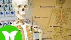 esqueleto para niños eduteca - YouTube