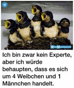 Genervter Mann - Frauenfeindliche Witze - lustige Vögel