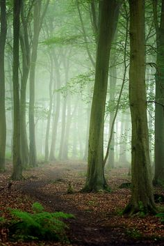 Friston Forest   Flickr - Photo Sharing!