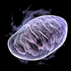 What are Mitochondria? Mitochondria are bean-shaped organelles that float freely inside almost every cell in our body. What Is Cholesterol, Cholesterol Symptoms, Cholesterol Lowering Foods, Cholesterol Levels, Coenzym Q10, Personalized Medicine, Gene Therapy, Cell Membrane, Lyme Disease