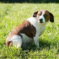 The Davinci Foundation for Animals RESCUE ACROSS THE NATION:TN Code Red 12/30/14★ •TN• Breed:Beagle NAME: DALMATION Age: Adult Gender: Female Shelter Information: Elizabethton Carter County Animal Shelter 135 Sycamore Shoals Dr Eliz...