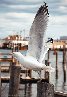 http://dontcallmebetty.tumblr.com/post/20787114916/kieljamespatrick-the-seagull-sees-farthest-who