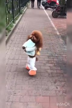 Happy dog going on shopping - - Cute Funny Animals, Cute Baby Animals, Funny Cute, Funny Dogs, Animals And Pets, Funny Dog Memes, Cute Puppies, Cute Dogs, Cute Babies