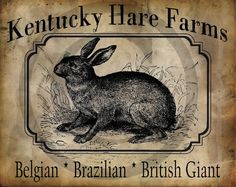 Primitive Kentucky Hare Farms Bunny Rabbit  Print by Starrmtnprims, $3.00