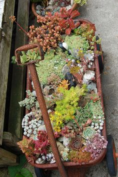 I had a garden full of succulents (and rocks) on my front porch forever. When we moved the wagon fell apart from rust. Moved the succulents into other planters. Dream Garden, Garden Art, Garden Plants, House Plants, Garden Design, Succulents In Containers, Cacti And Succulents, Planting Succulents, Planting Flowers