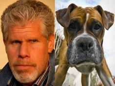 Is it ok that: These 20 Animals Totally Look Like Celebrities?