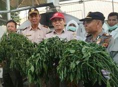 Tanamanan Cabai Dari Tiongkok Mengandung Bakteri Erwinia Chrysantemi