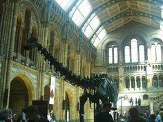 Museo de Historia Natural #Londres