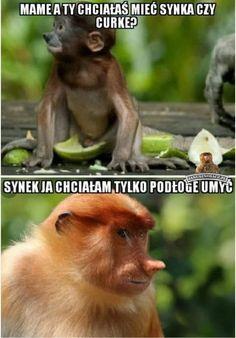 Janusz Nosacz - najlepsze memy o Januszu Nosacz, Grażynie Nosacz, Pioterze Nosacz i somsiedzie. Generator memów o Polaku. Polish Memes, Very Funny Memes, Funny Mems, Best Memes, Funny Animals, Fun Facts, Jokes, Lol, Humor