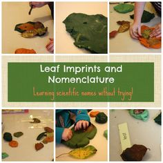 Make Leaf Imprints while learning Nomenclature