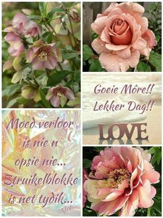Good Night Greetings, Good Morning Wishes, Good Morning Quotes, Lekker Dag, Afrikaanse Quotes, Goeie More, Beautiful Sunrise, Beautiful Pictures, Flowers
