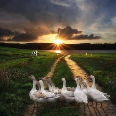 ~ Thank you Mara !!! ~ For the love of geese ~ 💗