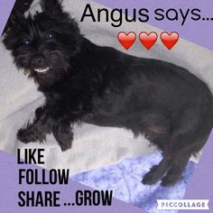 Angus says:  Follow, like, share, and watch your followers grow.  Other