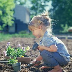 Little girl planting pansies at the beginning of spring