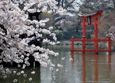 Japanese garden #inspiration