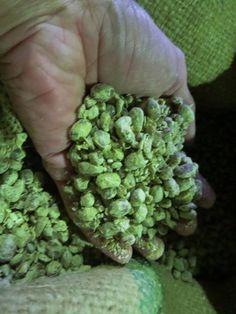 国産大豆と国産小麦で造った「麹(こうじ)」