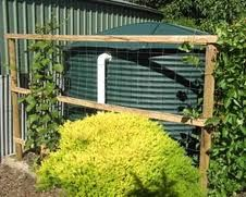 How To Disguise A Rainwater Tank Gardening Pinterest More Best Tanks Ideas