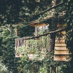 #cabin #treecabin #cabaña #cabañaenelarbol #cabana #forest #trees #arboles #bosque by koljos