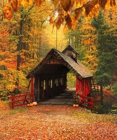 Fall foliage & covered bridges