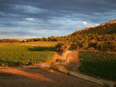 Domaine de la Verriere #Provence #Wines Coucher de soleil