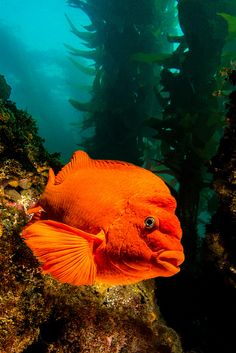 garibaldi1July26-13 | Flickr - Photo Sharing!