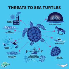 marine biology Threats to Sea Turtles. Sand `N Sea Properties TX Sea Turtle Facts, Racing Extinction, Save The Sea Turtles, Marine Debris, Ocean Unit, Save Our Oceans, Marine Conservation, Turtle Love, Marine Biology