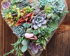 Coeur succulente moyen séjour créations™ jardin Vertical