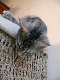 Minette tigrée regardant en bas du haut d'un panier
