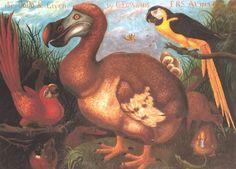 Dead as a Dodo: Origin of the Expression
