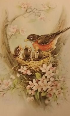 Red Farm Studio Set of 6 Vintage Beautiful Robin Red Breast Mommy with baby birds at feeding time in their nest Note Cards with Envelopes Pawtucket Rhode Island in Original Box. Robin Tattoo, Small Bird Tattoos, Nature Sketch, Watercolor Bird, Watercolor Paintings, Paper Artwork, Bird Pictures, Vintage Birds, Bird Art