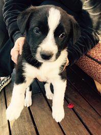 Our puppy Buddha ❤️